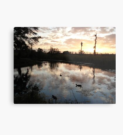SUNSET WITH MUSCOVIES (ECONFINA CREEK, FL) Metal Print
