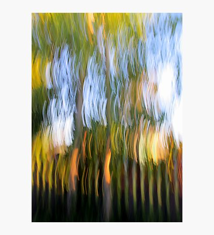 Trees by the Fence Photographic Print