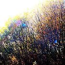 Rainbow Trees by Chris1249