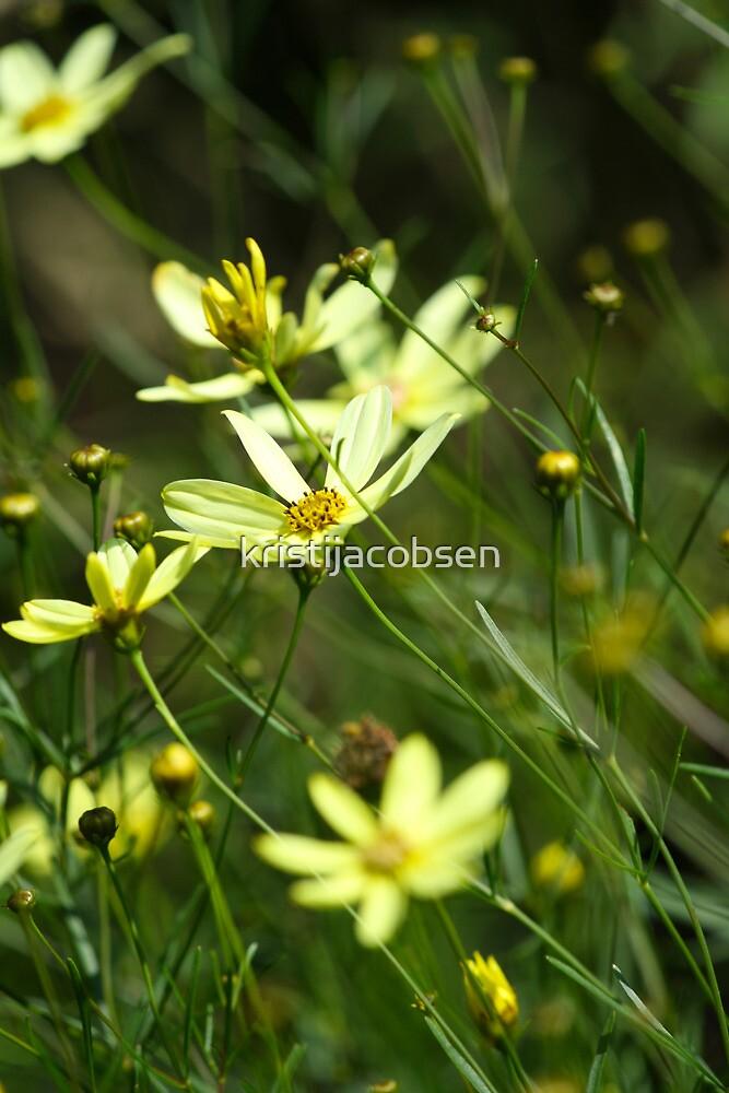 Wild Yellow by kristijacobsen