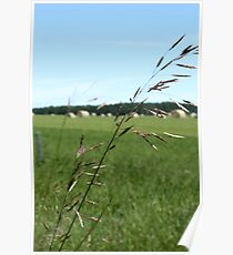 Prairie Grasses Poster