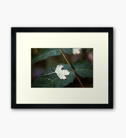 Leaf on Leaf Framed Print
