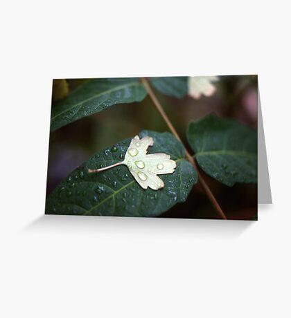 Leaf on Leaf Greeting Card
