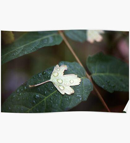 Leaf on Leaf Poster