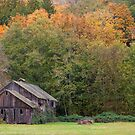 A Country Fall by Barb White
