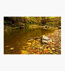 McDowell Creek Landscape Photographic Print