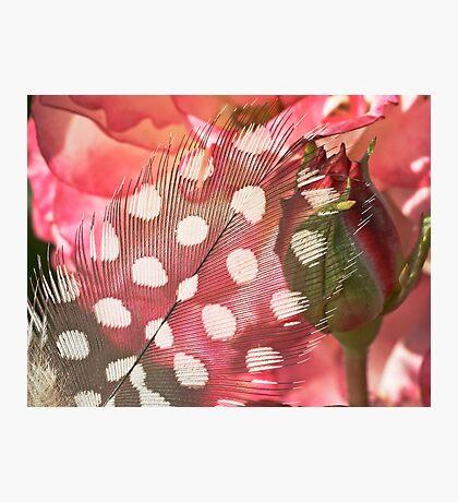 Hidden Pink Photographic Print