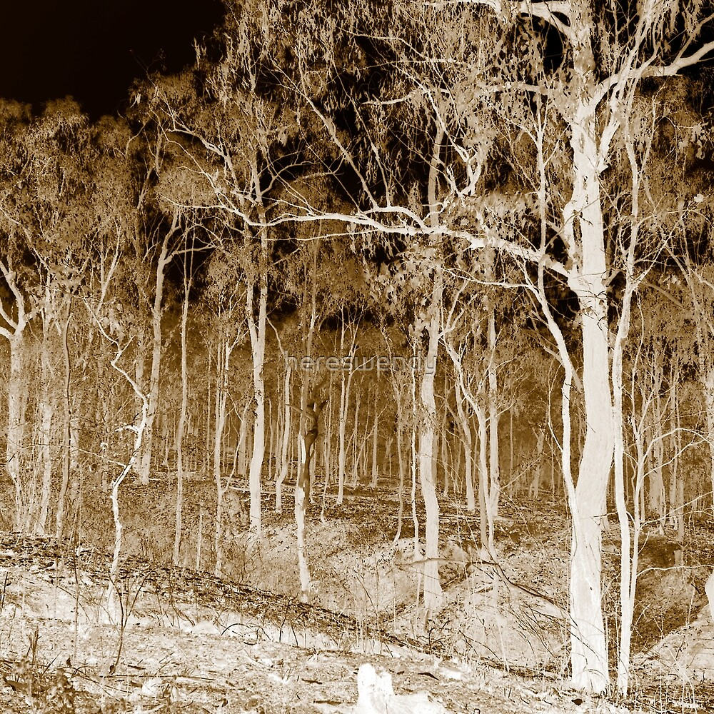 Fire scarred landscape at night by hereswendy