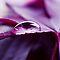 Monochrome - The Color Purple