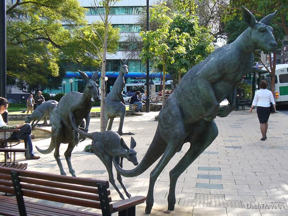 Kangaroos in downtown Perth, Western Australia by DashTravels