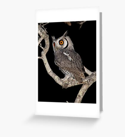 Southern White Faced Owl Greeting Card