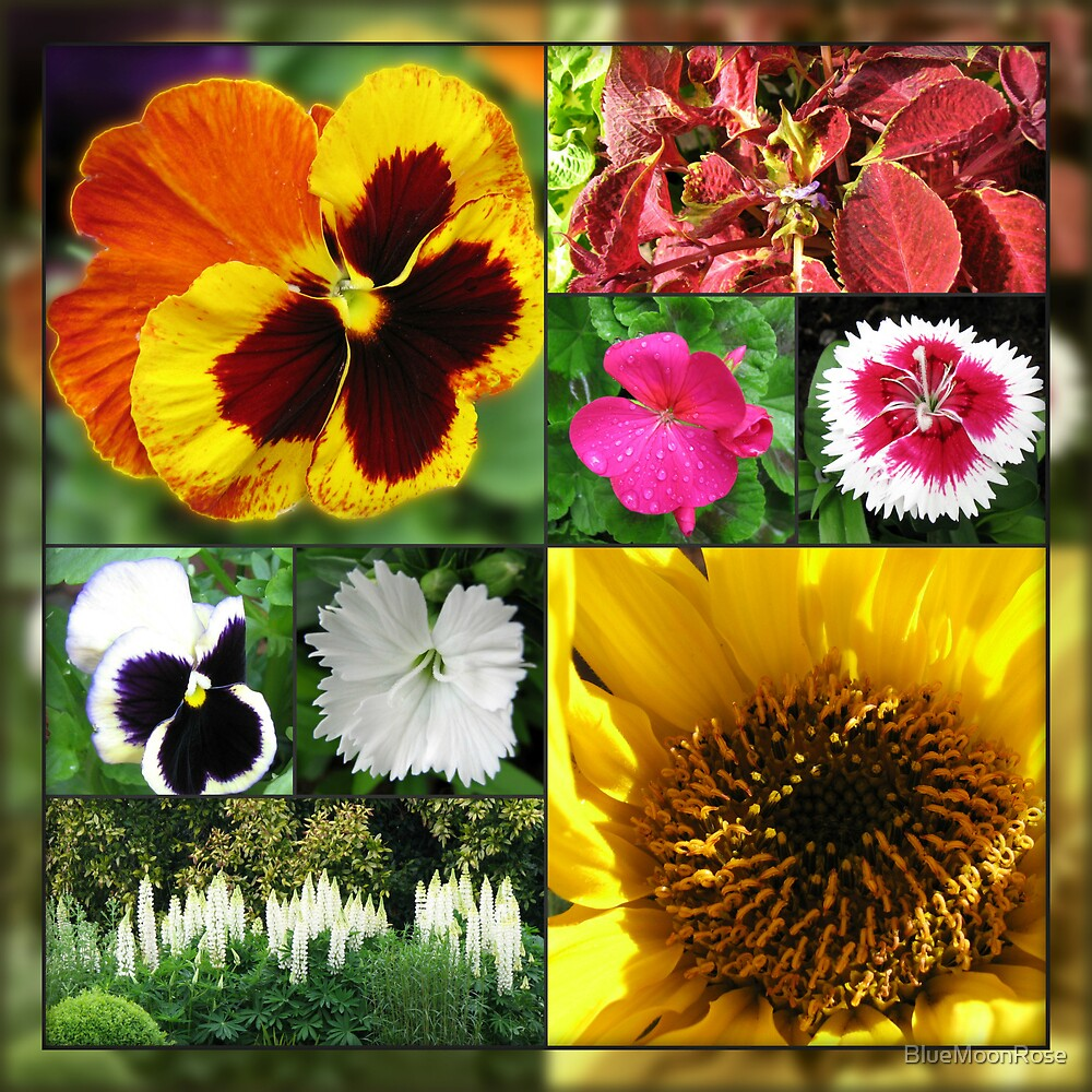 Late Summer Flowers Collage by BlueMoonRose