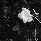 Étude en Noir by © Joe  Beasley IPA