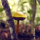mushroom by © Joe  Beasley IPA
