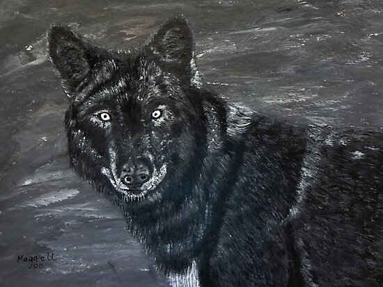 Black wolf  by maggie326