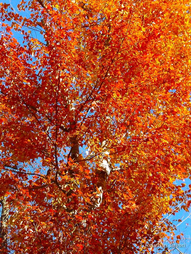 Fall Fire By Jonathan Green by Jonathan  Green