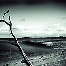 Rope Tree Beach 2 by Doug Cook