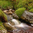 A Wicklow Stream by Martina Fagan