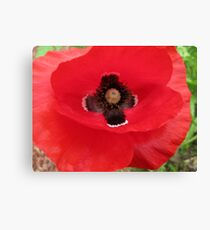 Eleventh of the Eleventh Canvas Print