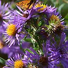Moth Drinking Nectar from Purple Flower by Paula Betz