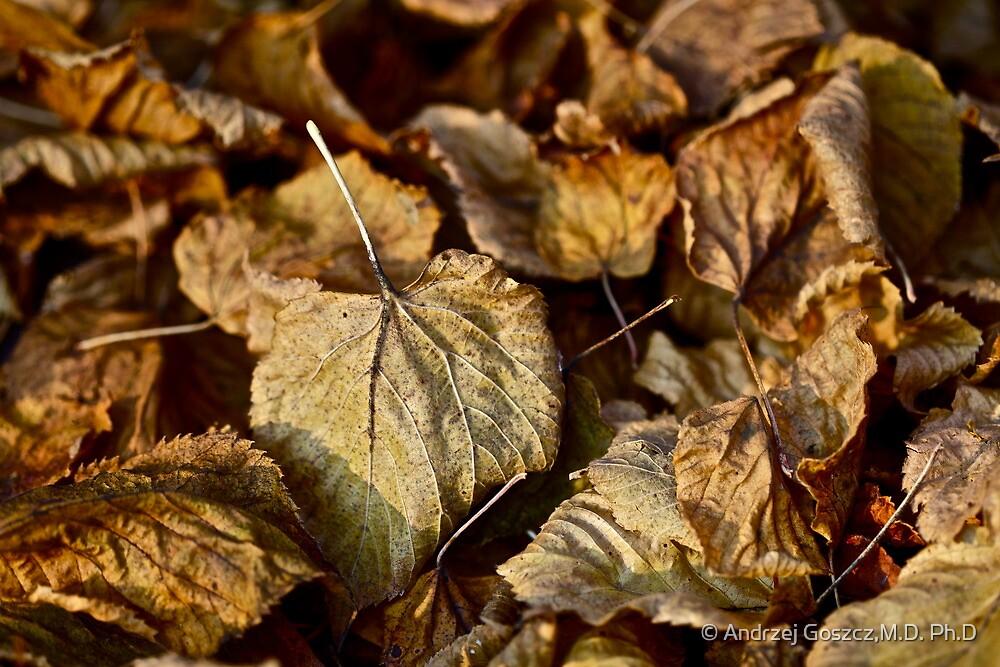 5 ★★★★★ . Poesie d'amore e  e Jardins en Automne . by vicomte Brown Sugar. Vive la France . Favorites: 2 Views: 325 . thx! by © Andrzej Goszcz,M.D. Ph.D