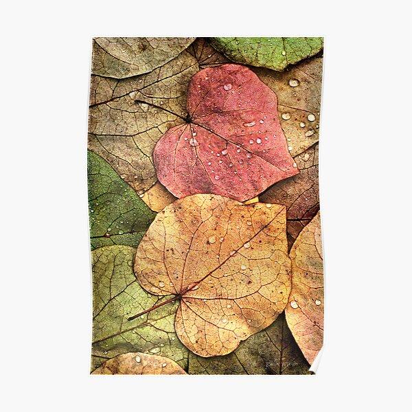 Redbud Leaves Poster