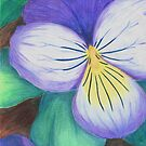Purple Pansy by Rhonda Blais
