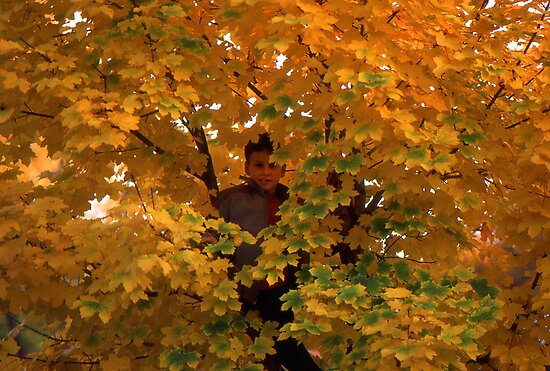 Boy in Tree by Phil Campus