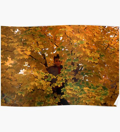 Boy in Tree Poster