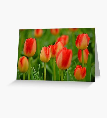 A Tapestry Of Tulips Greeting Card