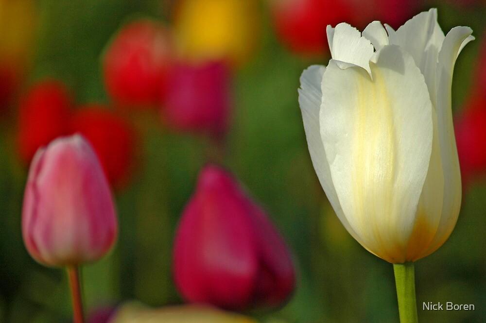 Tulipscape by Nick Boren
