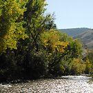River Through Golden by Colleen Drew