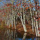 Autumn Blue by Karol Livote
