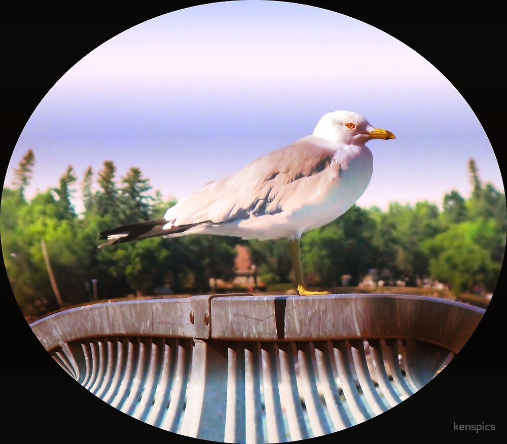 Seagull Sentinel by kenspics