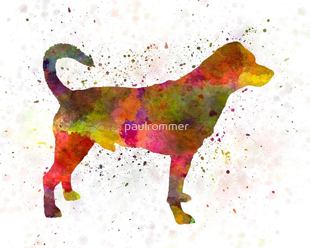 Danish swedish farmdog 01 in watercolor by paulrommer