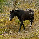 Black Horse in Autumn Forest by Donna Ridgway by Donna Ridgway