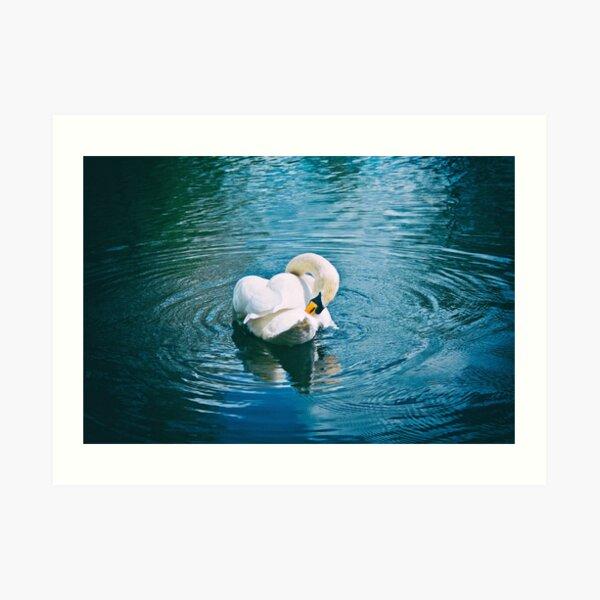 Lone Swan - 28/04/15 Art Print