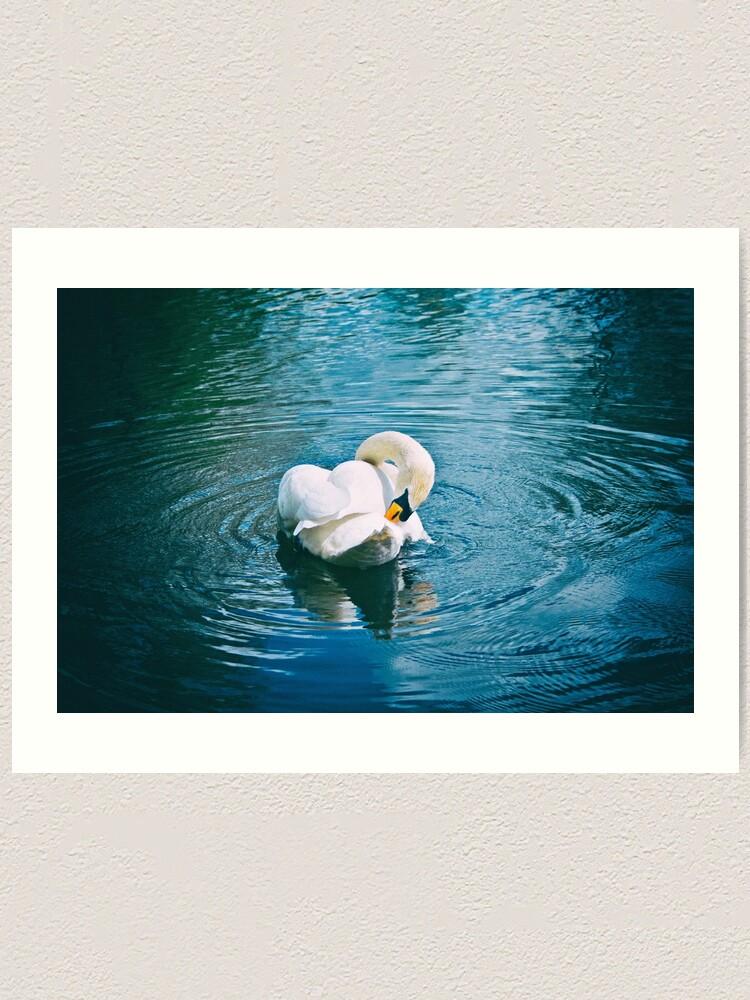 Alternate view of Lone Swan - 28/04/15 Art Print