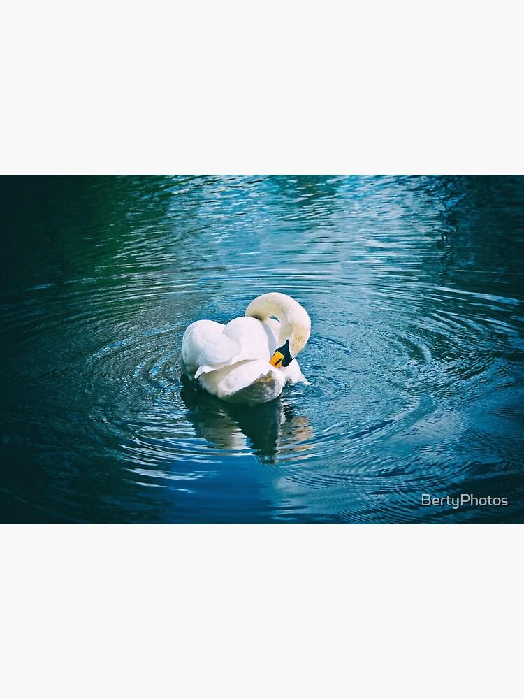 Lone Swan - 28/04/15 by BertyPhotos