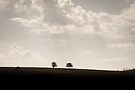 Trees on a hill by Marcel Ilie