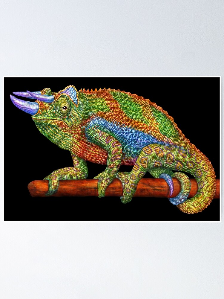 Jackson S Chameleon Poster By Timjeffsart Redbubble