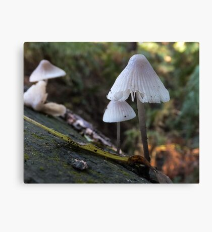 Bonnet Bell Cap Canvas Print