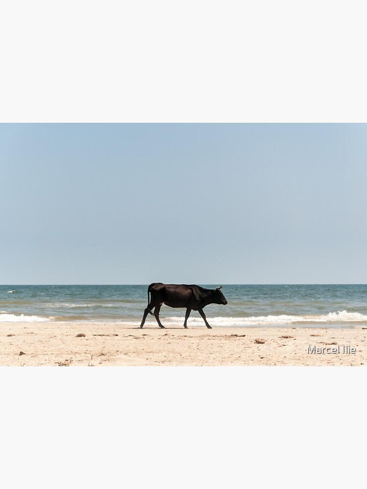 Black Cow by imaruseru