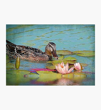 The Female Mallard &The Waterlily Photographic Print