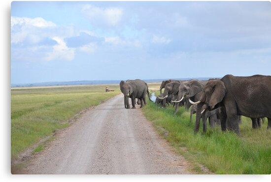 Elephant Crossing by PeneJane