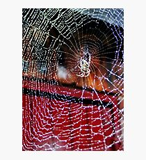 Macro Web Photographic Print