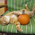 Fall Cat by Paulette1021