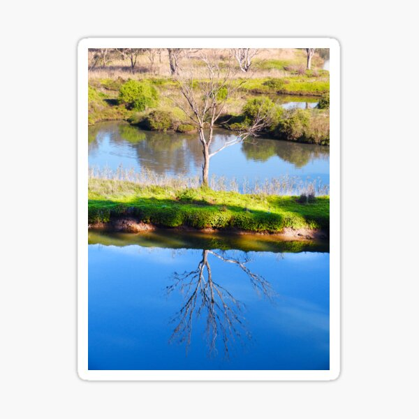 Reflected Tree Sticker