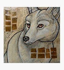Arctic Wolf Photographic Print