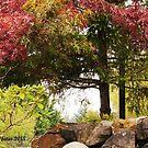 Fall variety by Rainydayphotos